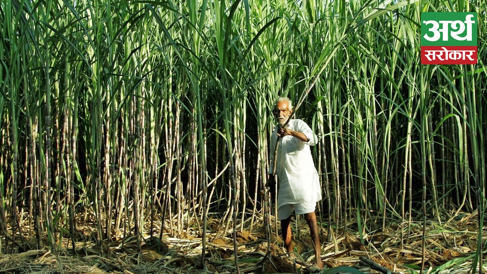 Sugarcane Farmets